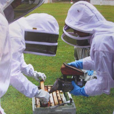 programmes - Talking Bees